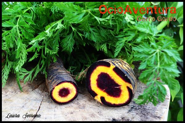 zanahoria-mora-cuevas-bajas