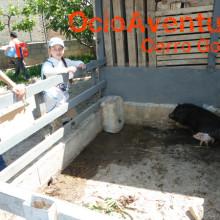 Excursión colegio a Granja Escuela Granada